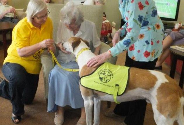 Queen Elizabeth Park has nominated George for the national Pets As Therapy Dog of the Year 2013 / 2014.